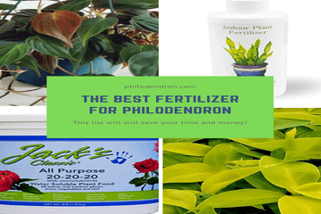 the best fertilizer for philodendron